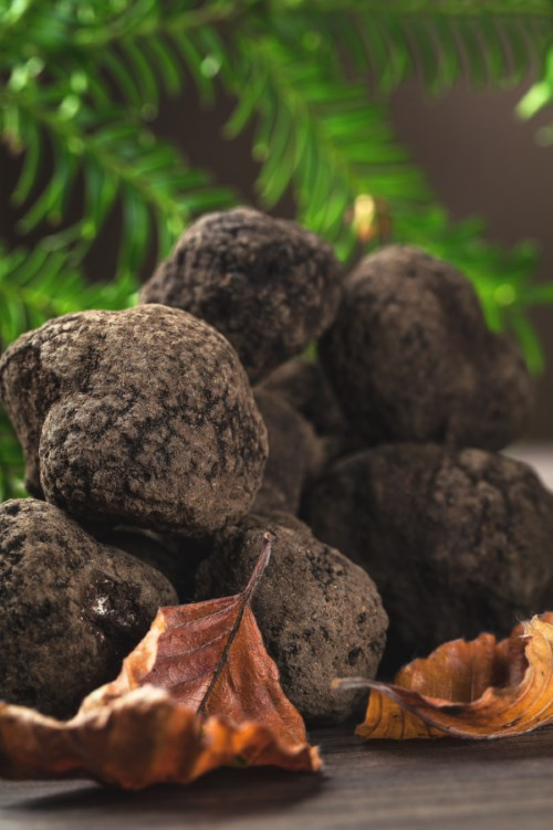 delicate and rare black truffle mushroom typical Italian food